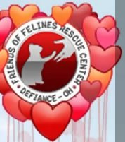 Watch Friends of Felines Rescue Center Kitty Cam Live TV from USA