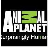 Watch Animal Planet HD Live TV from Poland